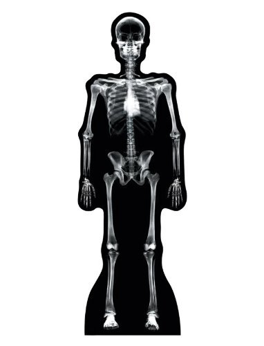 Montessori inspired biology human skeleton study guide free x ray skeleton advanced graphics life size cardboard fandeluxe Choice Image
