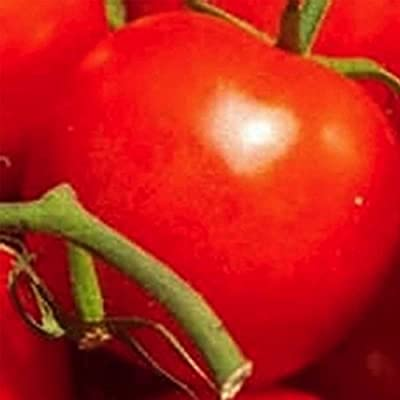 Tomato Garden Seeds - VR Moscow (Determinate) - Non-GMO, Heirloom, Vegetable Gardening Seed