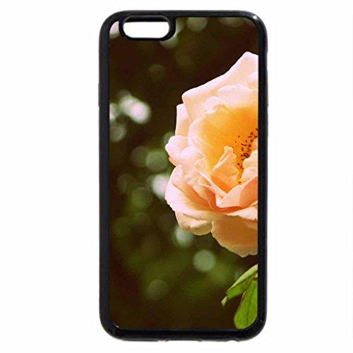 iPhone 6S / iPhone 6 Case (Black) soft orange rose