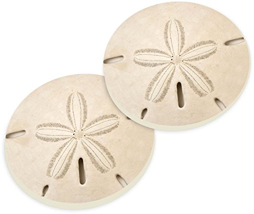 (Sand Dollar Seashell Coastal Ceramic Car Coaster Pack (Set of)