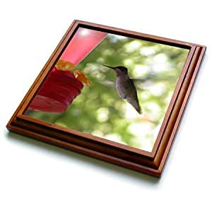 trv_29594_1 Beverly Turner Bird Photography - Hummingbird Flying to Feeder - Trivets - 8x8 Trivet with 6x6 ceramic tile