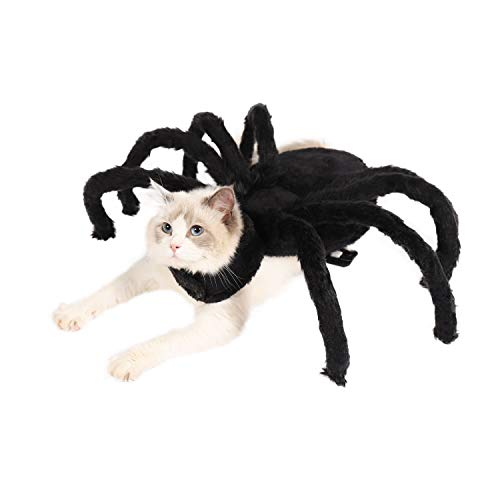 The Cutest Spider(Cat) You've Ever Seen