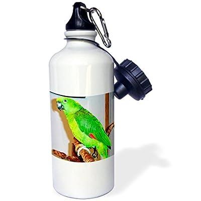 Zhaoshoping Jaune–nuque Parrot Sports Bouteille d'eau en acier inoxydable Bouteille d'eau pour femme homme enfants 400ml