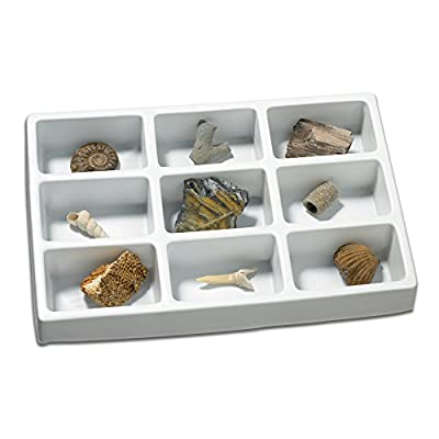 Educational Insights Fossil Collection, Ages 8 and up, (9 Pieces with Storage Tray): Toys & Games