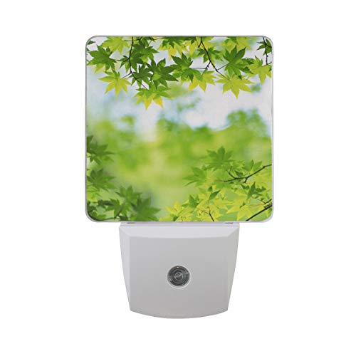 OuLian Night Light Green Leaves Summer Led Light Lamp for Hallway, Kitchen, Bathroom, Bedroom, Stairs, DaylightWhite, Bedroom, Compact