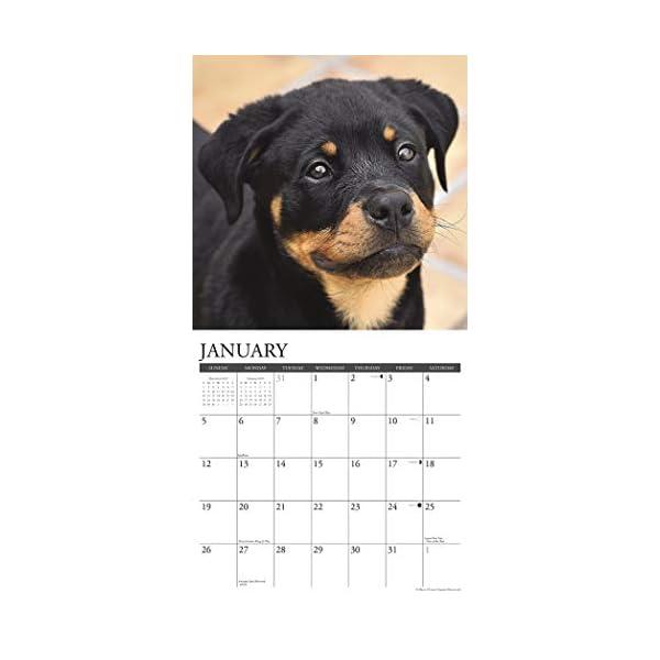 Just Rottweiler Puppies 2020 Wall Calendar (Dog Breed Calendar) 2