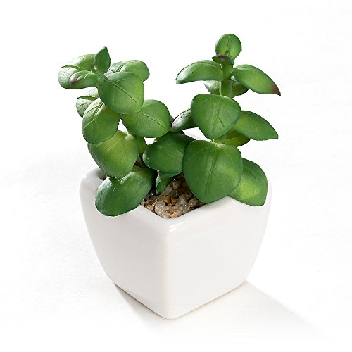 Nattol Modern Mini Artificial Succulent Plants Potted in Cube-Shape White Ceramic Pots for Home Decor, Set of 4 (White) by Nattol (Image #3)