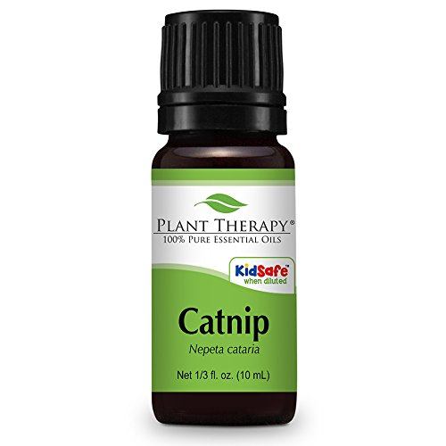 Plant-Therapy-Catnip-Essential-Oil-100-Pure-Undiluted-Therapeutic-Grade-10-ml-13-oz