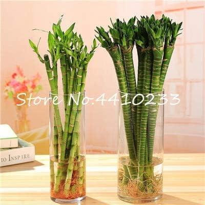 Amazon.com: Gran promoción. 30 piezas frescas de bambú para ...