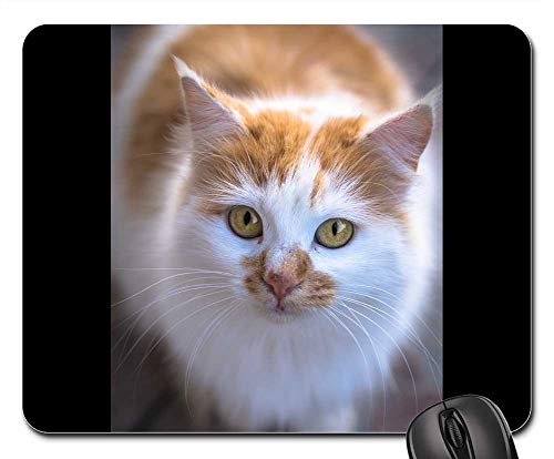 Mouse Pads - Cat in The Doghouse Animal