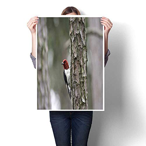 bybyhome Living Room Home Office Decorations Red-Headed Woodpecker Decorative Fine Art Canvas Print Poster K 16