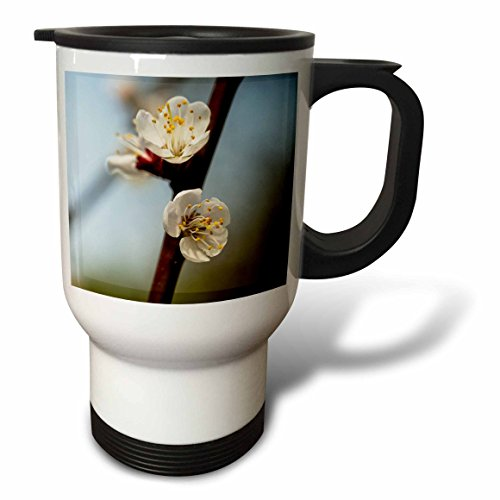 3dRose Alexis Photography - Flowers Sakura Beautiful - Two Japanese apricot flowers on a twig against the soft background - 14oz Stainless Steel Travel Mug (tm_286519_1) by 3dRose