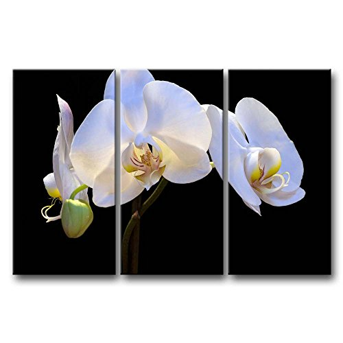 So Crazy Art - Canvas Print Wall Art Painting For Home Decor,White Orchids 3 Pieces Panel Paintings Modern Giclee Stretched And Framed Artwork Oil The Picture For Living Room Decoration,Flower Pictures Photo Prints On Canvas