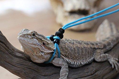 Bearded Dragon Collar: Amazon.com