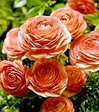Ranunculus - Tecolote® - Salmon 10 bulbs