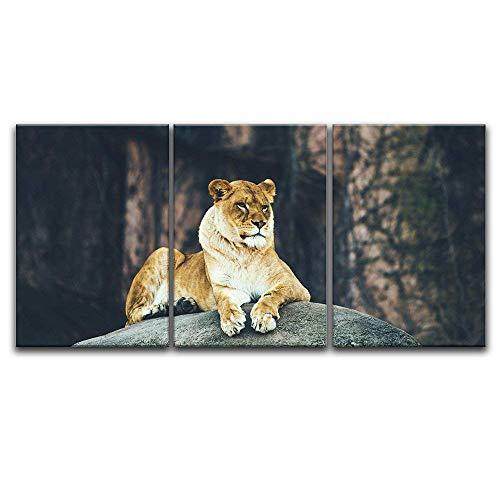 3 Panel Lion Lying on a Boulder x 3 Panels