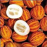Victorian Perfumed Melon 10 Seeds - Heirloom