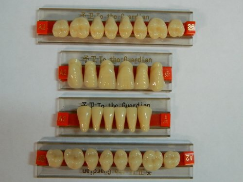 Halloween Horror Prop - Dental Quality Resin Teeth for Prop Building! ()
