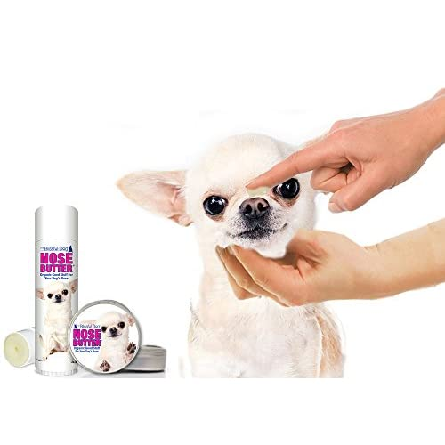 60%OFF The Blissful Dog Long Coat Chihuahua Nose Butter, 1-Ounce
