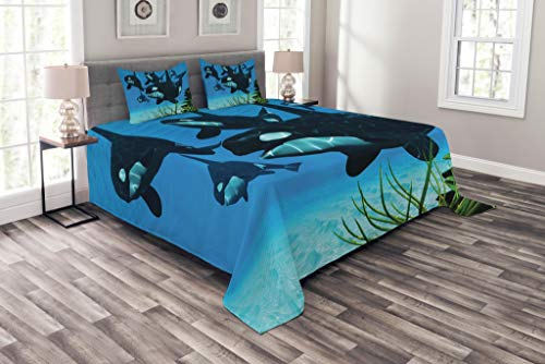 (Lunarable Whale Bedspread Set Queen Size, Pod of Killer Whales Swim Along a Reef Looking for Fish Prey Ocean Picture Print, Decorative Quilted 3 Piece Coverlet Set with 2 Pillow Shams, Sky Blue Green)