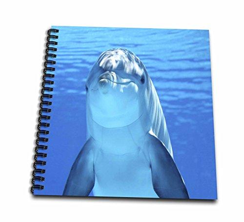 3drose Sea Lifeイルカ–イルカのイメージFace in the Water–Drawing Book 12x12 memory book db_256299_2