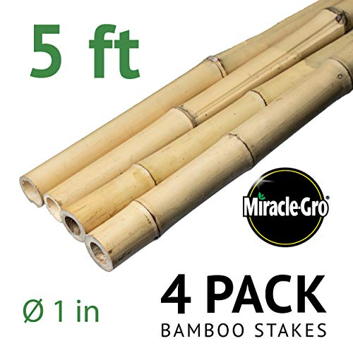 Bond SMG12068 Miracle-Gro Super Pole, 5ft x 1in Bamboo Stakes, 4 Pack, Natural (Canes Bamboo)