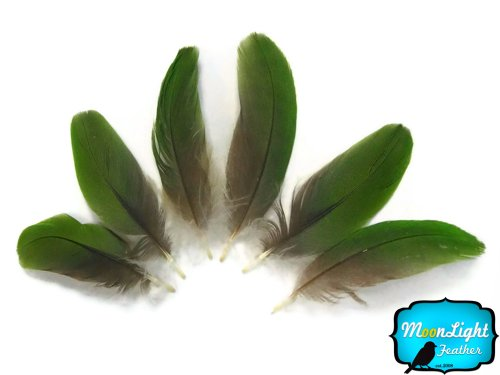 Parrot Feathers, Green Amazon Parrot Body Feathers (Rare) - 6 Pieces