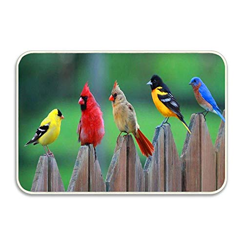 Huayuanhurug Birds of A Feather Entrance Door Mat, 36 x 24 inch Indoor Outdoor Rug, Seasonal Animal Theme Non-Slip Welcome Doormat for Entry, Patio Home -