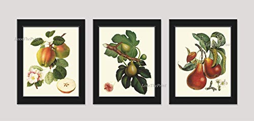 Fruit Print Set of 3 Antique Beautiful Botanical Blooming Apple Fowers Fig Pear Plants Garden Nature Home Room Decor Wall Art Unframed LF ()