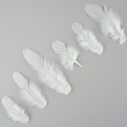 Zucker Loose Rooster Plumage White Dyed Feathers - 3-4'' - 1lb - White by Zucker