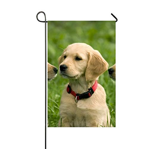 Niaocpwy Puppies of Golden Retriever Garden Flag House Flag Decoration Double Sided -