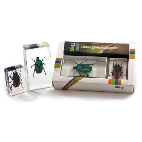 Beetle Collection 2 pc Set
