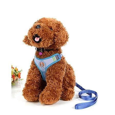 Servicio para mascotas Correas para perros Ropa de seguridad Cofre ...