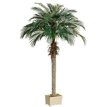 Amazon Com 6 Phoenix Palm Tree In Rectangular Plastic