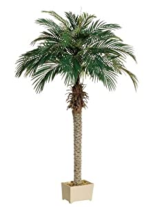 Amazon Com 6 Phoenix Palm Tree In Rectangular Plastic