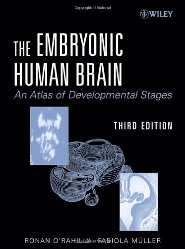 The Embryonic Human Brain: An Atlas Of Developmental Stages by Ronan R. O'Rahilly (2006-11-06)