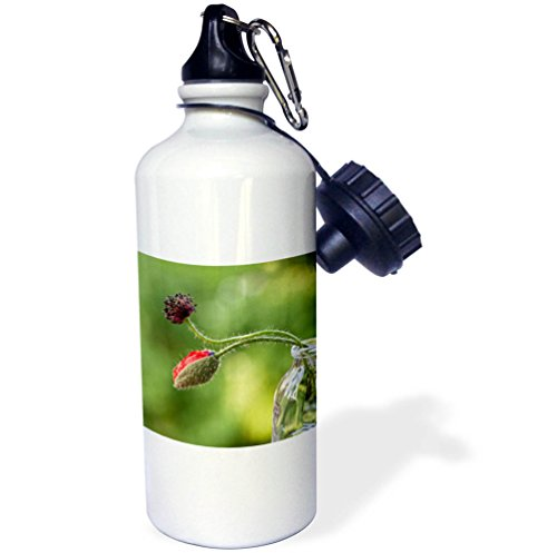 3dRose Andrea Haase Nature Photography - Poppy Flower Bud In A Glass Vase - 21 oz Sports Water Bottle (wb_276249_1) ()