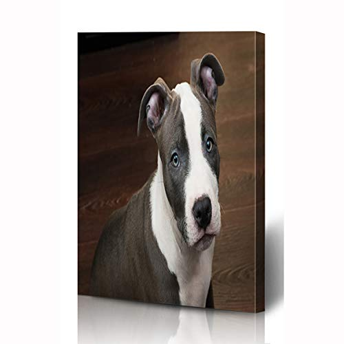 Ahawoso Canvas Prints Wall Art 8x10 Inches Looking Blue Pit White Gray Color Pitbull Puppy Terrier Sitting Bull Nature Brown American Nose Wooden Frame Printing Home Living Room Office Bedroom ()