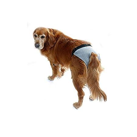 Feicuan Mascota perros Ropa interior de Higiene Nappy Bragas de Periodo Menstruación pañales para Perro Hembra: Amazon.es: Juguetes y juegos