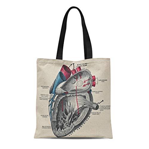 Ablitt Tote Bag Shoulder Bags Canvas Anatomy Vintage Anatomical Heart Diagram Biology Sciences Grocery bag Women's Handle Shoulder Tote Shopper Handbag ()