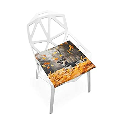 Bardic FICOO Home Patio Chair Cushion Fall Maple Leaves Dog Square Cushion Non-Slip Memory Foam Outdoor Seat Cushion, 16x16 Inch: Home & Kitchen