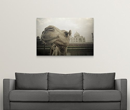 David DuChemin Premium Thick-Wrap Canvas Wall Art Print entitled Camel In Front Of The Yamuna River And Taj Mahal, Agra, India by Canvas on Demand (Image #3)