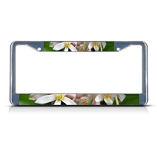 License Plate Covers LEMON BLOSSOM Flower Chrome Metal License Plate Frame Tag Border
