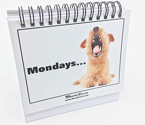 Funny Office Gift – Doggy Moodycards! Great Cubicle Accessories – Make Everyone Laugh with These Lovable Pets –Hilarious Dog Pictures Tells Everyone How You Feel – Fun, Amusing, Useful & Adorable