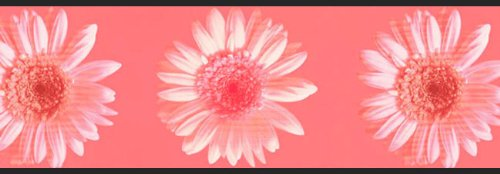 Pink Daisy Flowers Prepasted Wallpaper Border Roll ()