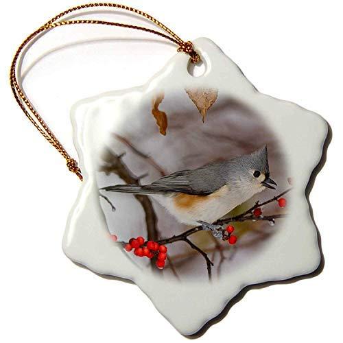 Ornament Bush (Ditooms Danita Delimont Bird Tufted Titmouse in Common Winterberry Bush in Winter, Illinois 3
