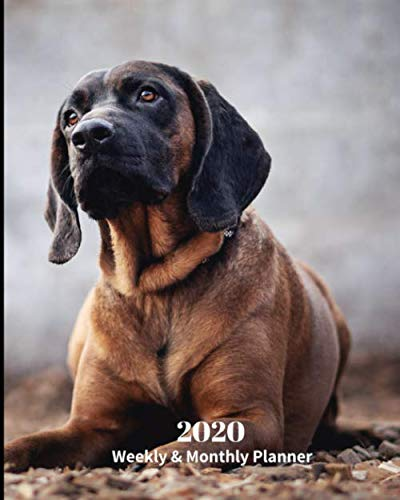 Bloodhound Dog Breed - 2020 Weekly and Monthly Planner: Monthly Calendar with U.S./UK/ Canadian/Christian/Jewish/Muslim Holidays- Calendar in Review/Notes 8 x 10 in.-Bloodhound Dog Breed Pets