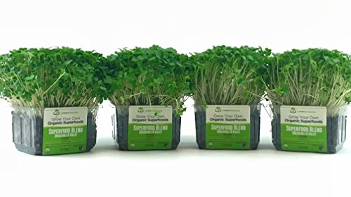 Organic Kale and Broccoli Microgreen Growing Kit - Value 4-Pack, Non-GMO, Nutrient Rich, Ready to eat in 5-7 days