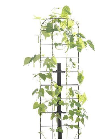Gardener S Revolution  Vine Trellis