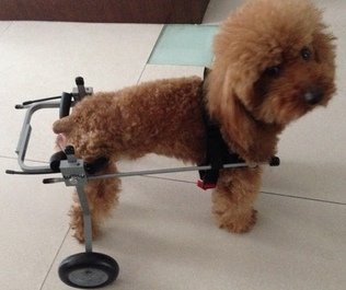 Adjustable Dog Wheelchair (XS) , Weight 5 to 20 lbs, Hip Height:9''--14'', Hind legs Rehabilitation